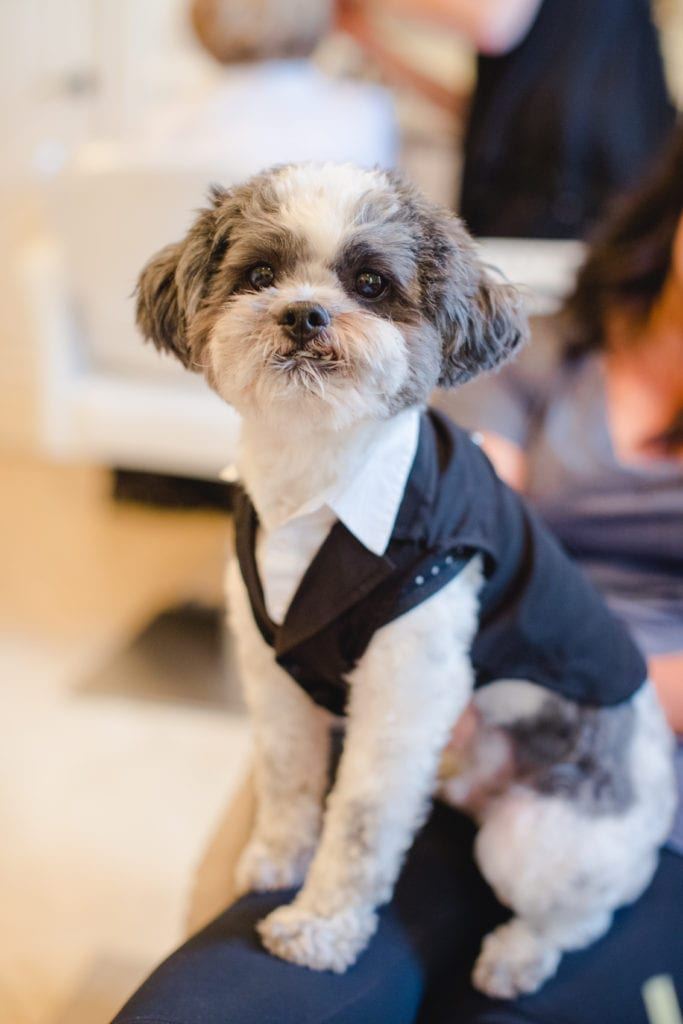 dogs in wedding, dog in tux